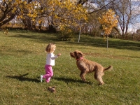 Kids and Dogs playing outside together