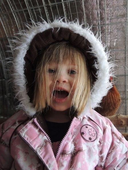 Clara in chicken coop