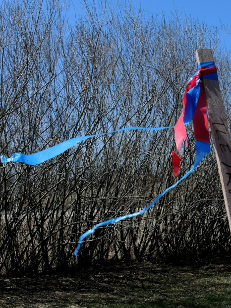 willow fence with survey flags