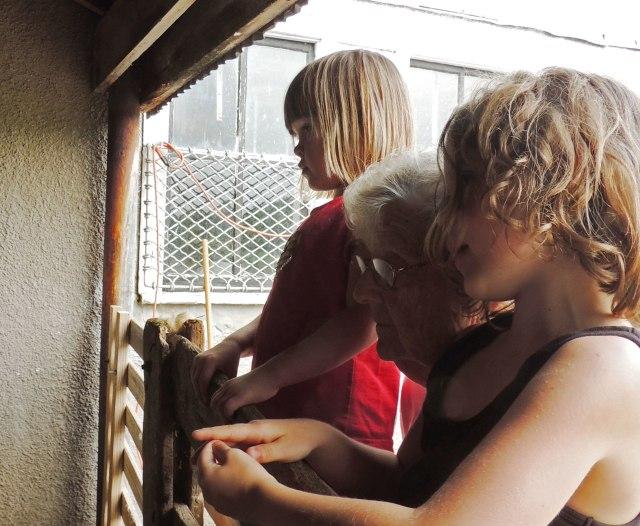 Jane, Ivy, Granny watching shearing