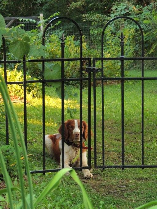 Trip behind gate