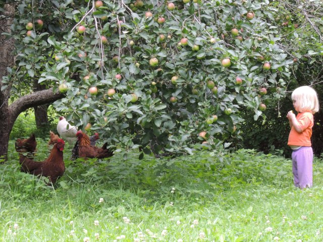 Jane and chickens under apple tree