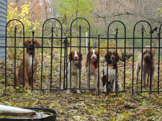 five dogs at the gate