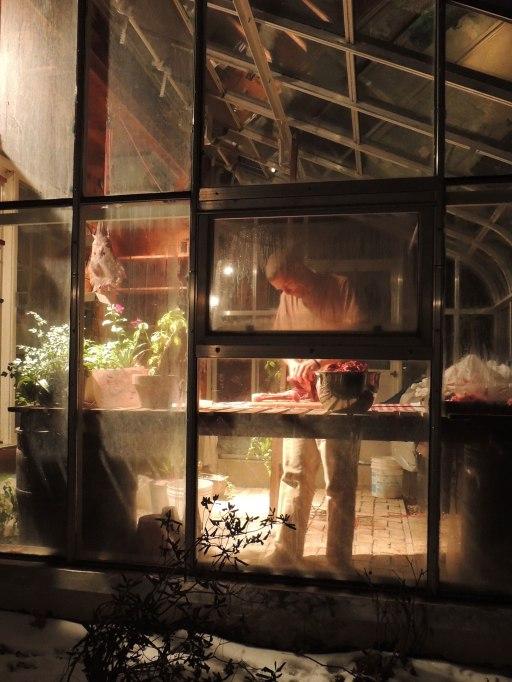 butchering deer in greenhouse