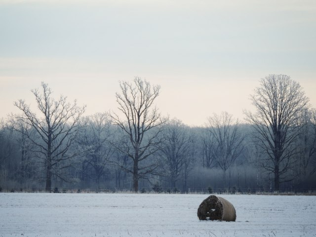 Three trees and a hay bale in winter