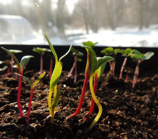 January seedlings