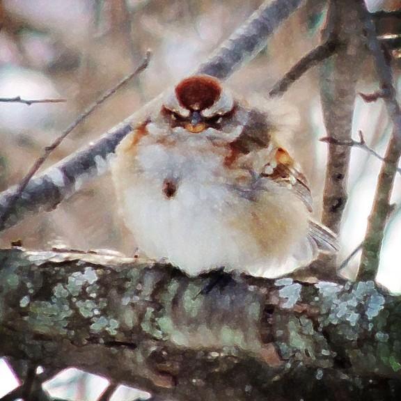 sparrow stylized