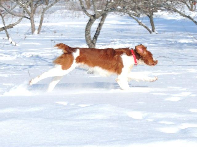 Trip running in snow