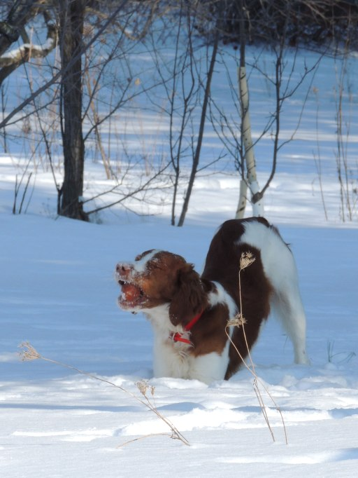 Trip with apple in snow