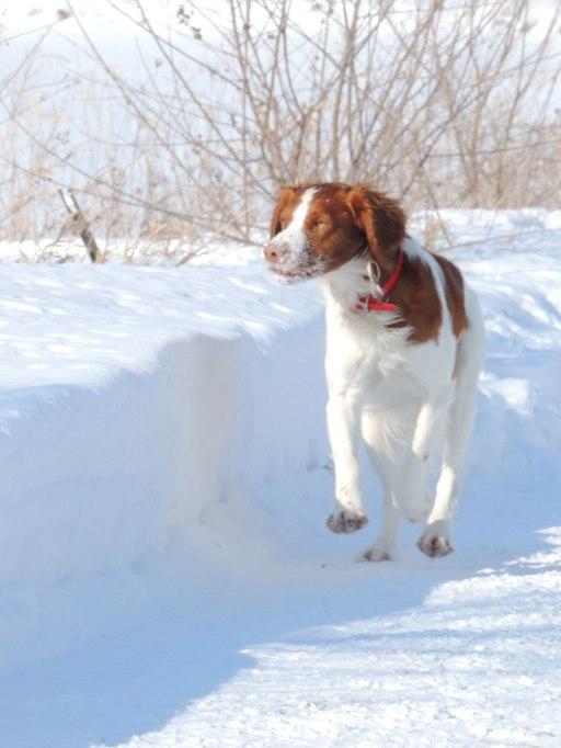 Trip running on snowy driveway