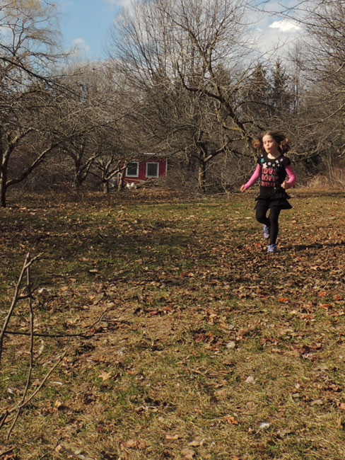 Ivy running in orchard
