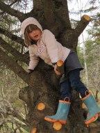 The climber!