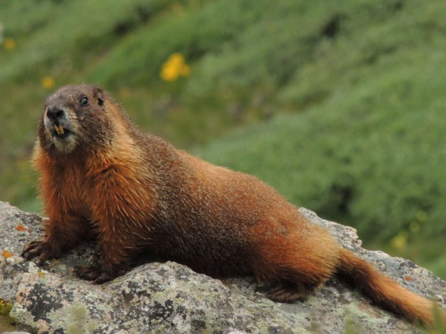 See! Even this marmot thought my story was icky!