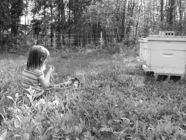 Clara and the bee hives