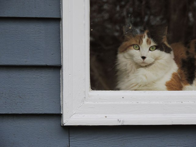 Gypsy in window