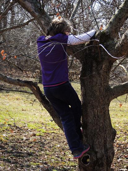 Ivy climbs tree