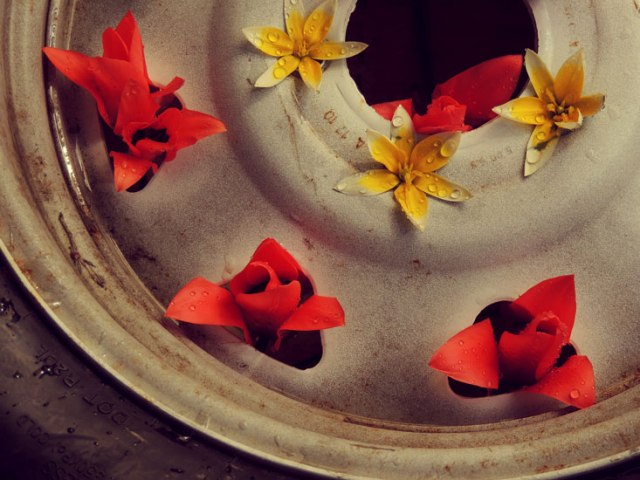 flowers in spare tire