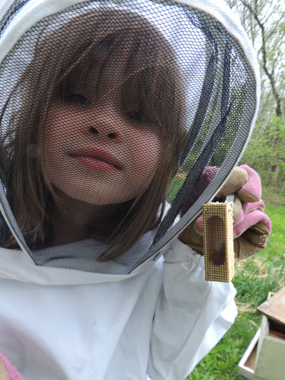 Clara holding up the queen bee in her cage for inspection.