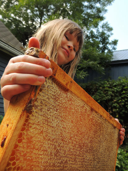 Clara and a frame of honey
