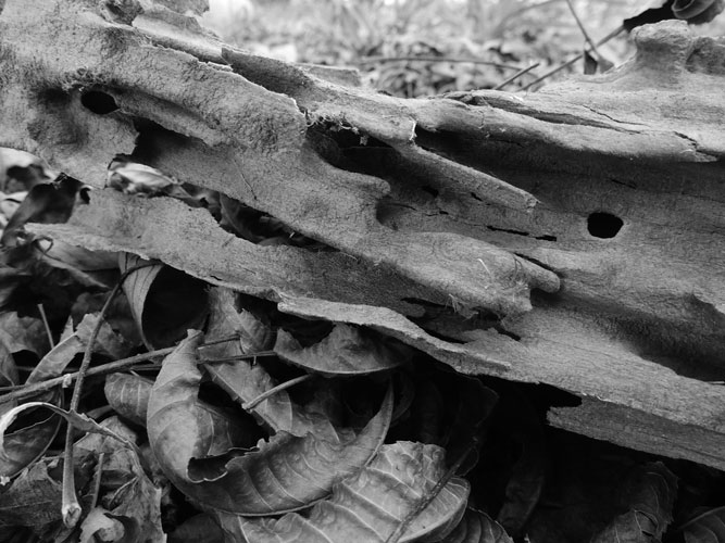 firewood carved by ants