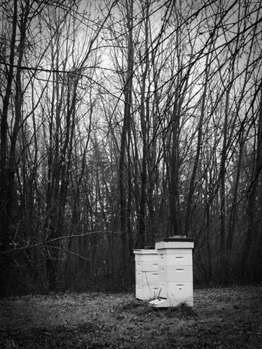 black and white bee hives
