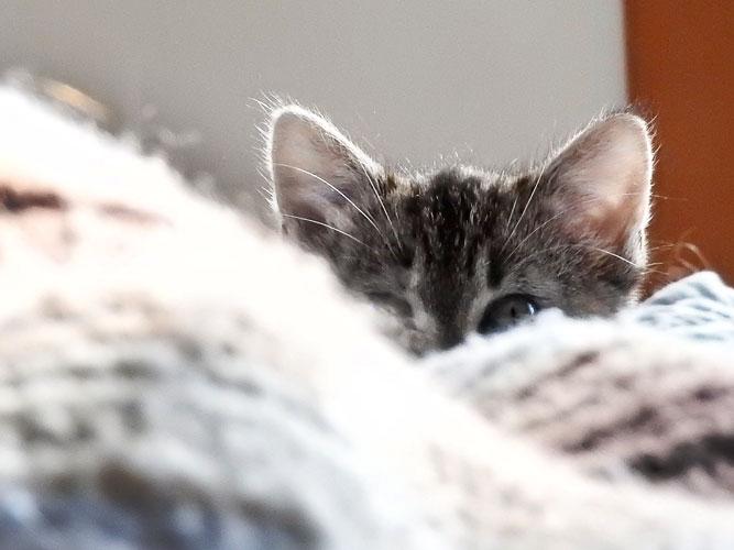 Sarah Cat
