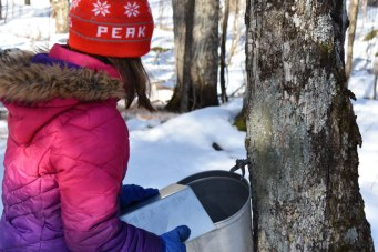 Collecting the sap