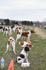 Awesome dog training seminar with Rick Smith!